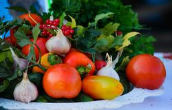 Fresh vegetables on the plate on the table stock photography