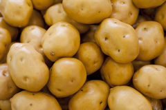Fresh vegetables, potatoes Stock Photography