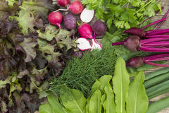 Fresh vegetables, radishes, lettuce, green onions, dill. And sorrel Stock Images
