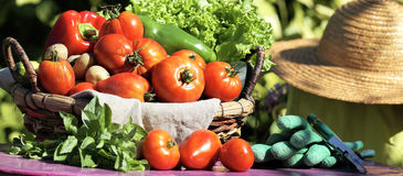 Fresh vegetables and secateur Stock Images