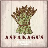 Fresh vegetables sketch background. Vintage hand drawing illustration of a asparagus Stock Photos