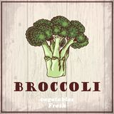 Fresh vegetables sketch background. Vintage hand drawing illustration of a broccoli Stock Photo