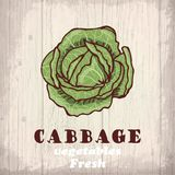 Fresh vegetables sketch background. Vintage hand drawing illustration of a cabbage Stock Photography