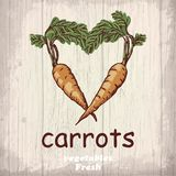 Fresh vegetables sketch background. Vintage hand drawing illustration of a carrots Royalty Free Stock Photos
