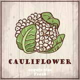 Fresh vegetables sketch background. Vintage hand drawing illustration of a cauliflower Royalty Free Stock Images