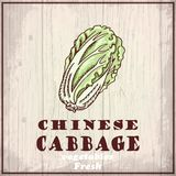 Fresh vegetables sketch background. Vintage hand drawing illustration of a Chinese cabbage Stock Photography