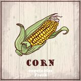 Fresh vegetables sketch background. Vintage hand drawing illustration of a corn Stock Photo