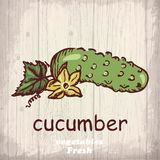 Fresh vegetables sketch background. Vintage hand drawing illustration of a cucumber Stock Photography
