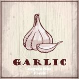 Fresh vegetables sketch background. Vintage hand drawing illustration of a garlic Stock Photo