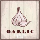 Fresh vegetables sketch background. Vintage hand drawing illustration of a garlic Stock Photo