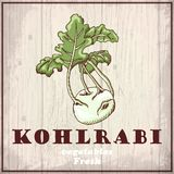 Fresh vegetables sketch background. Vintage hand drawing illustration of a kohlrabi Royalty Free Stock Images