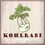 Fresh vegetables sketch background. Vintage hand drawing illustration of a kohlrabi Royalty Free Stock Images