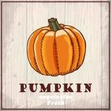Fresh vegetables sketch background. Vintage hand drawing illustration of a pumpkin Stock Photography