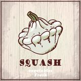 Fresh vegetables sketch background. Vintage hand drawing illustration of a squash Royalty Free Stock Photo