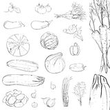 Fresh Vegetables Sketch Collection Stock Image