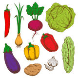 Fresh vegetables sketches for agriculture design Stock Photo