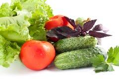 Fresh vegetables. Summer abundance of vegetables. Fresh vegetables: cucumbers, tomatoes and herbs. Summer abundance of vegetables Stock Images