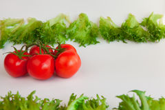Fresh vegetables - sweet  tomatoes and leaves of frillis Stock Photography
