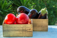 Fresh vegetables, tomatoes and aubergines,eggplant. In wooden boxes on a blue table Stock Image