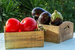 Fresh vegetables, tomatoes and aubergines,eggplant. In wooden boxes on a blue table Stock Images