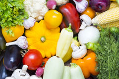 Fresh vegetables tomatoes cucumber squash. And greens background close-up Stock Image