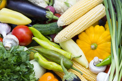Fresh vegetables tomatoes cucumber squash. And greens background close-up Stock Photos