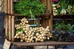 Fresh Vegetables at Union Square Greenmarket, Manhattan, New York City Royalty Free Stock Image