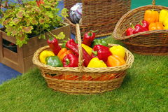 Fresh vegetables in basket: colored bell peppers Royalty Free Stock Photography