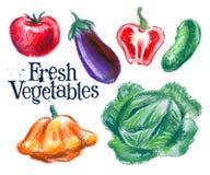 Fresh vegetables vector logo design template Stock Image