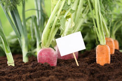 Fresh vegetables in a vegetarian garden with a white sign Royalty Free Stock Images