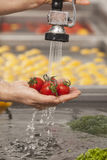 Fresh vegetables washed. And ready for preparation in a commercial kitchen Stock Photos