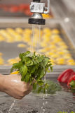 Fresh vegetables. Washed and ready for preparation in a commercial kitchen Royalty Free Stock Images