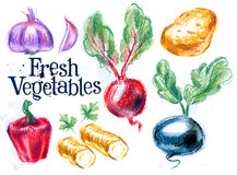 Fresh vegetables on white background. sketch Stock Image