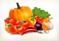 Fresh vegetables on white background. royalty free illustration