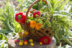 Fresh vegetables in a wicker basket. In the countryside Stock Image