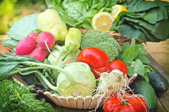 Fresh  vegetables in wicker basket Stock Image