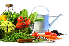 Fresh Vegetables With Watering Can Stock Photo