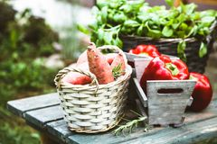 Fresh vegetables on wood stock photography