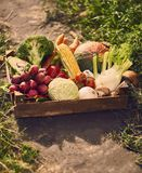 Fresh vegetables in wooden box. royalty free stock image