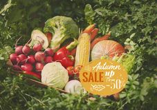 Fresh vegetables in wooden box. royalty free stock photos