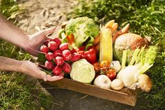 Fresh vegetables in wooden box. close up stock images