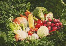 Fresh vegetables in wooden box. stock images