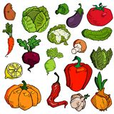 Set of various hand drawn vegetables. Sketches of different food. Isolated on white royalty free illustration