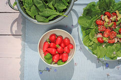Fresh, vegetarian salad and a bowl of radish Stock Images