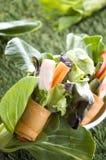 Fresh veggie roll Stock Images