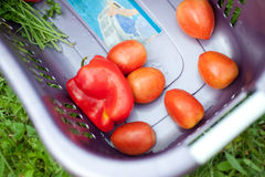 Fresh vegitables in basket Royalty Free Stock Photos