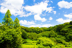 Fresh verdure against blue sky with clouds. An image of nature Royalty Free Stock Images