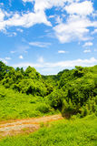 Fresh verdure against blue sky with clouds. An image of nature Stock Image