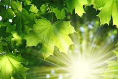 Fresh verdure in forest royalty free stock images