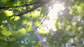 Fresh verdure, sunlight through the leaves stock footage